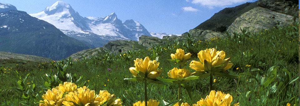 parco gran paradiso valle d aosta