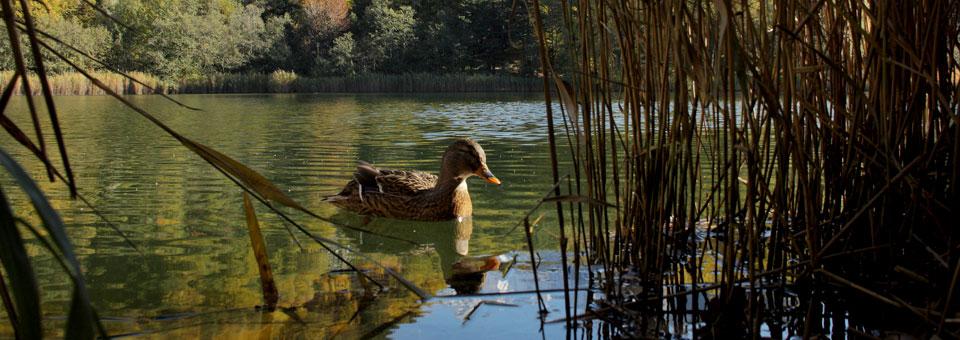 lago villa val d ayas