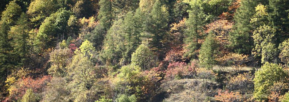 Pont d ael valle cogne
