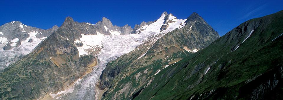 monte bianco saussurea