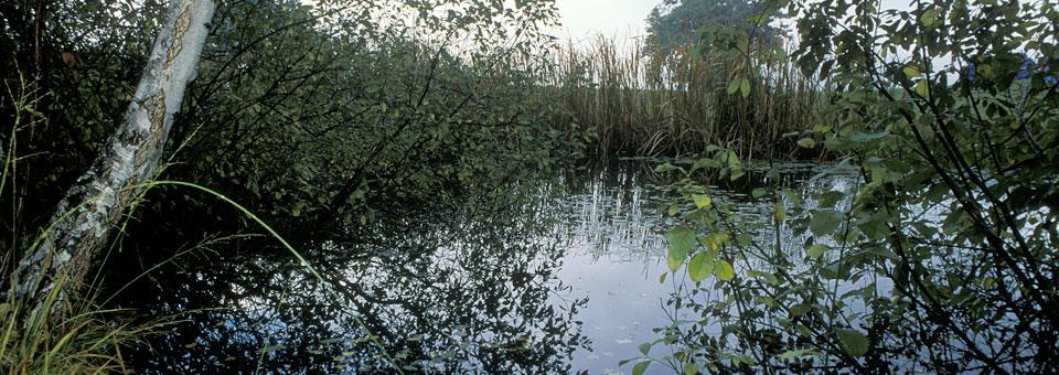 stagno holay riserve naturali
