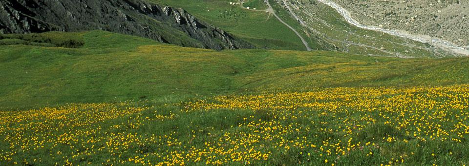ferret valle d aosta
