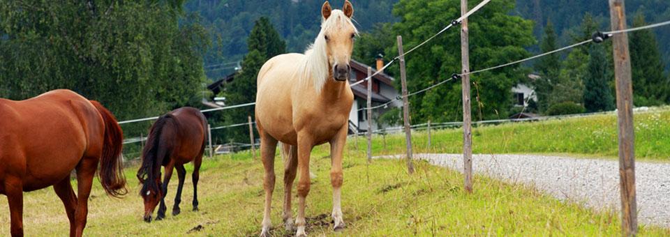 equitazione valle aosta