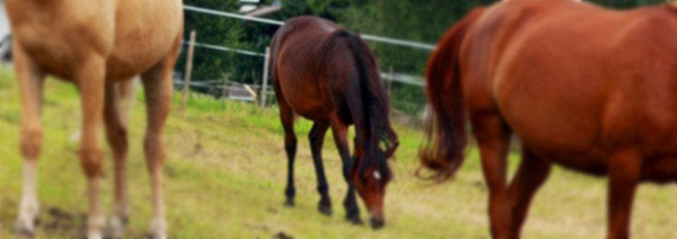 valle d aosta attività cavallo