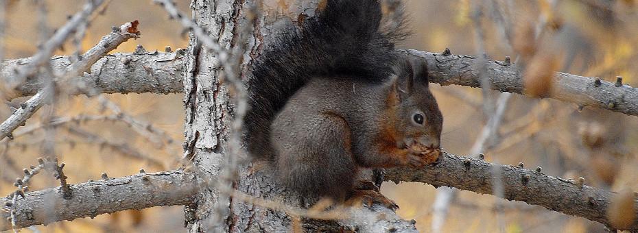 valle aosta scoiattolo